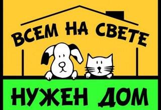 В Новороссийске 7 декабря стартовал проект группы ЗооЗащиты «Уроки Добра»